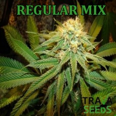 Photo Regular Seeds Mix